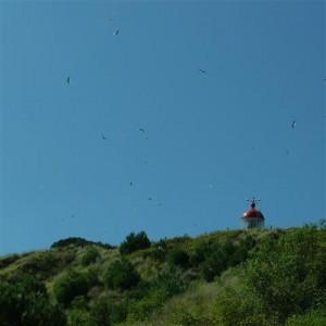 bruidsvlucht-meeuwen-2014-4 (Small)